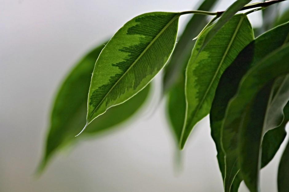 Waarom vertellen we onszelf dat planten liefde nodig hebben?